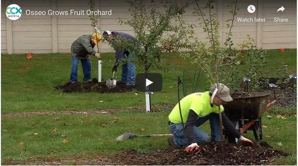 Osseo fruit tree orchard planting CCX video screenshot
