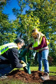 Tree planting in Champlin