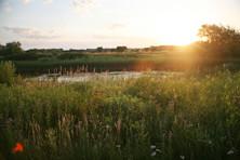 Wetland and prairie restoration