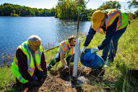 Tree planting in Champlin