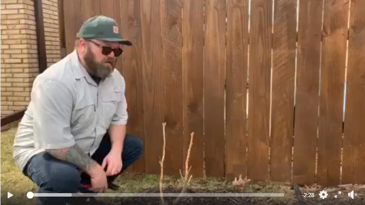 Screenshot spring tree care tips video 2