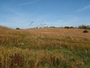 Conservation easement in Minnetrista