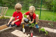 Students planting a school garden using compost
