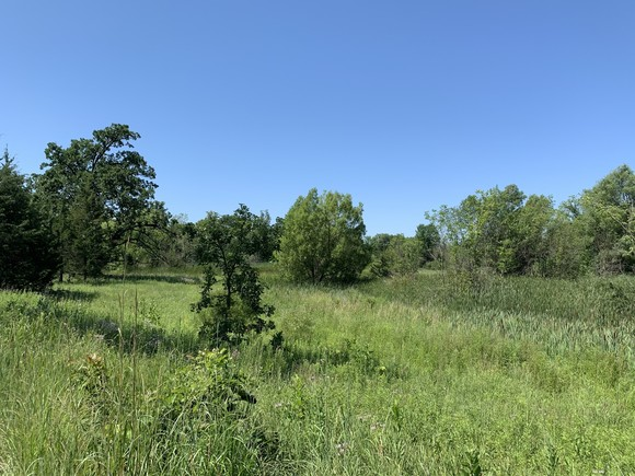 Prairie and forest on Clark property