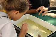 Girl examining try of water and water bugs during past Children's Water Festival