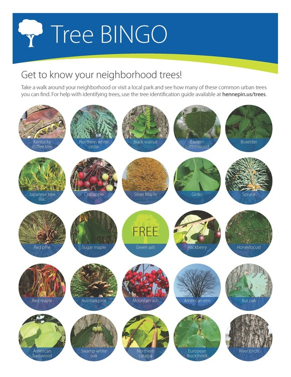 Neighborhood tree bingo card with variety of trees and names and photos