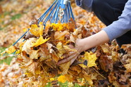 Person raking up leaves