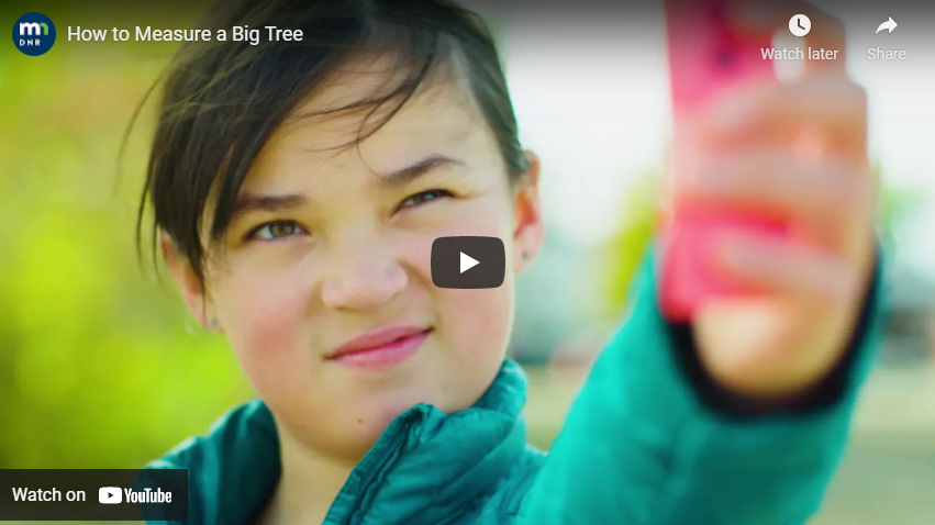 Screen shot of tree measuring video