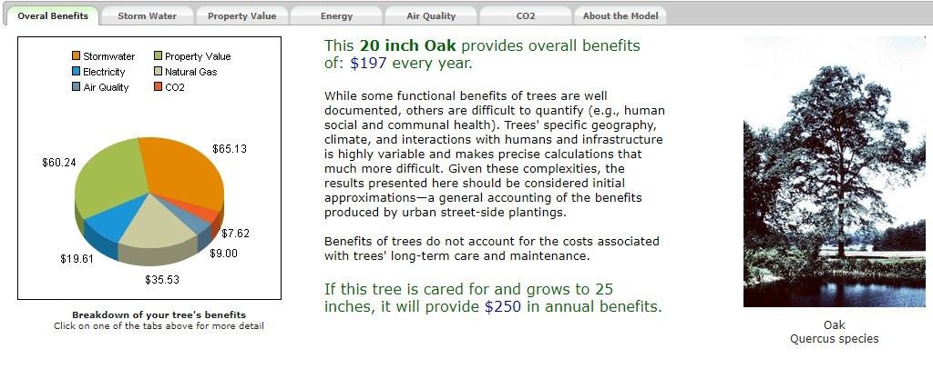 Benefits of 20-inch oak tree dashboard including  a pie chart and description of the benefits