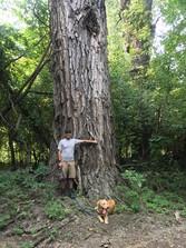 Man and dog standing next to big cottonwood tree