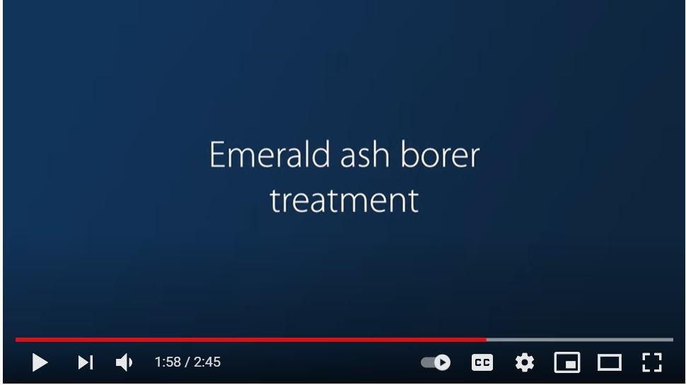Screenshot of video that says EAB treatment