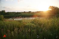 Wetland at sunrise