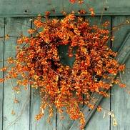 Oriental bittersweet wreath