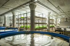 Urban Organics Aquaculture