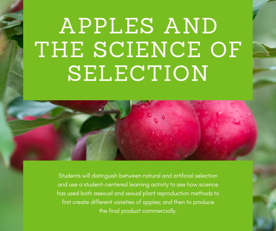 Apples and the Science of Selection