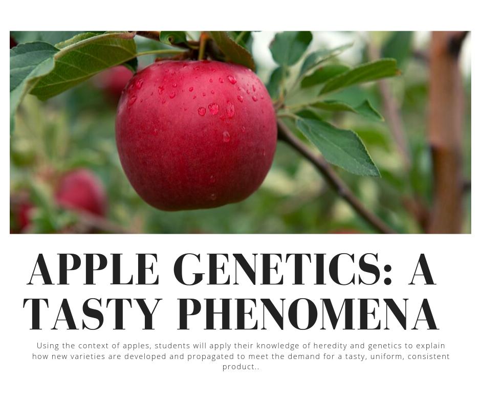 Apple Genetics