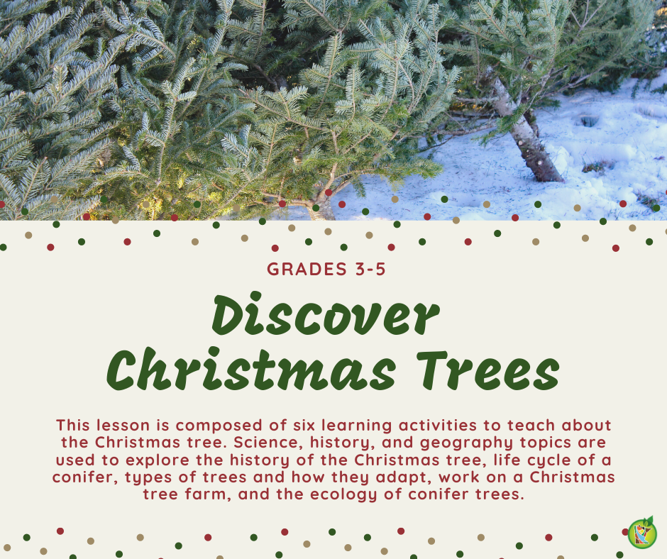 Discover Christmas Trees