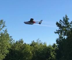 Gypsy moth management aerial application