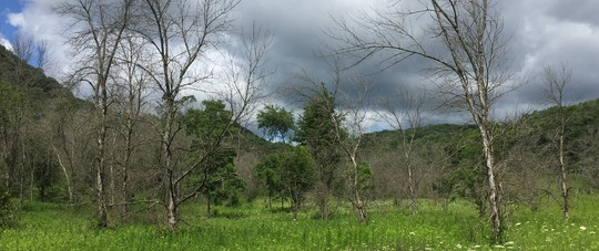 EAB-infested trees in Great River Bluffs State Park