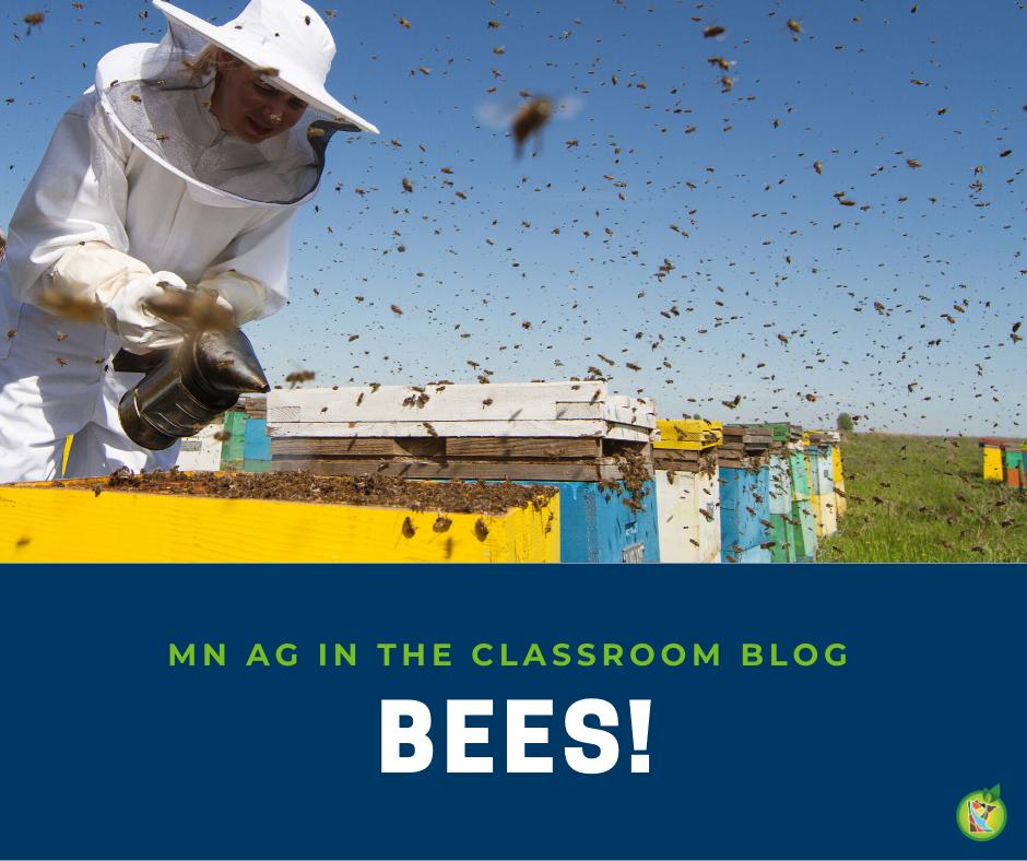 Bees!  blog post