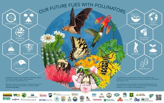 2020 Pollinator Poster