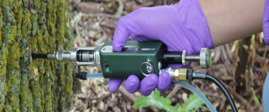 Gloved hand using tools to inject insecticide into an ash tree.