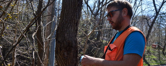 MDA staff outside setting an insect trap in a forested area