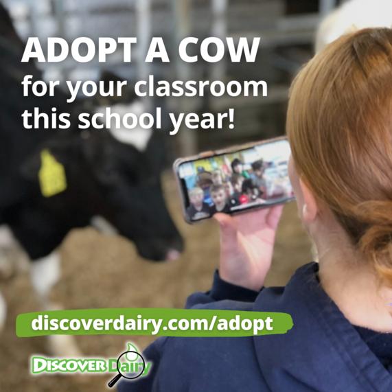 Adopt a Cow
