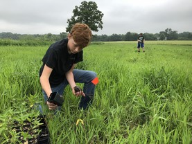 pollinator planting
