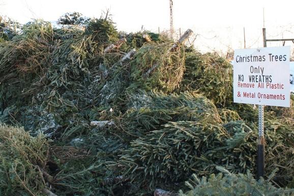 Christmas Tree Pile