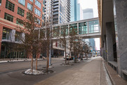 Trees on the Nicollet Mall in downtown Minneapolis.