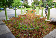 A raingarden inside a traffic diverter (boulevard).