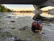 A plastic bottle floating in the Mississippi River.