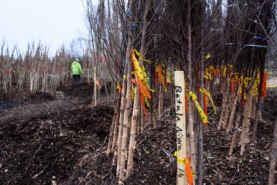 tree site