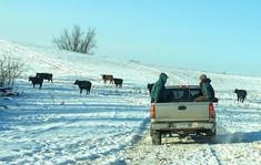 winter grazing 2016