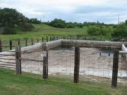 livestock dairy grant