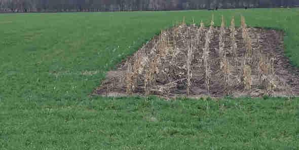 SE MN cover crops Cannon River