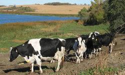 livestock environment
