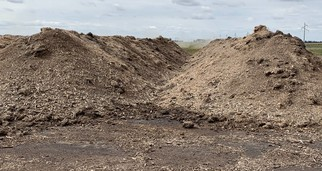 swine compost