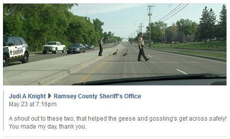 Goose escort with deputies