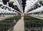 VIC Plant Sale