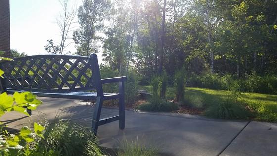 LSC rain garden