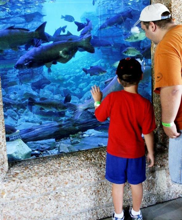 State Fair Aquarium