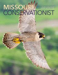 Peregrine falcon by Noppadol Paothong
