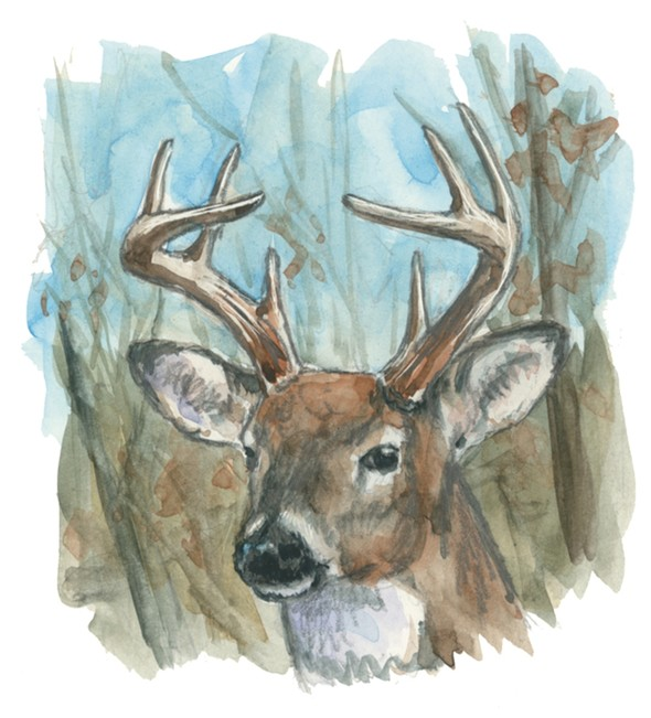 A         painting ahows the head of an antlered white-tailed buck in the         woods.
