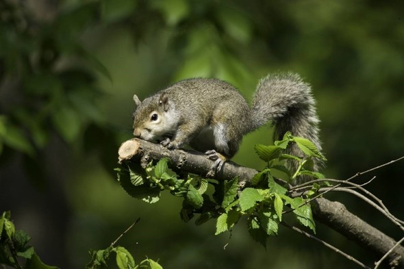 Grey