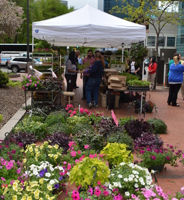 Downtown Flowers Farmer's Market