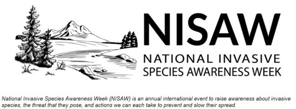 nisaw with subheading