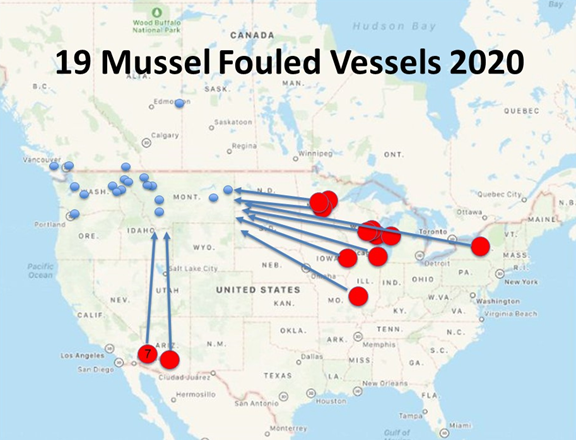 19 mussel boats