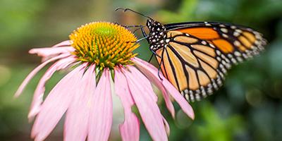 butterfly header